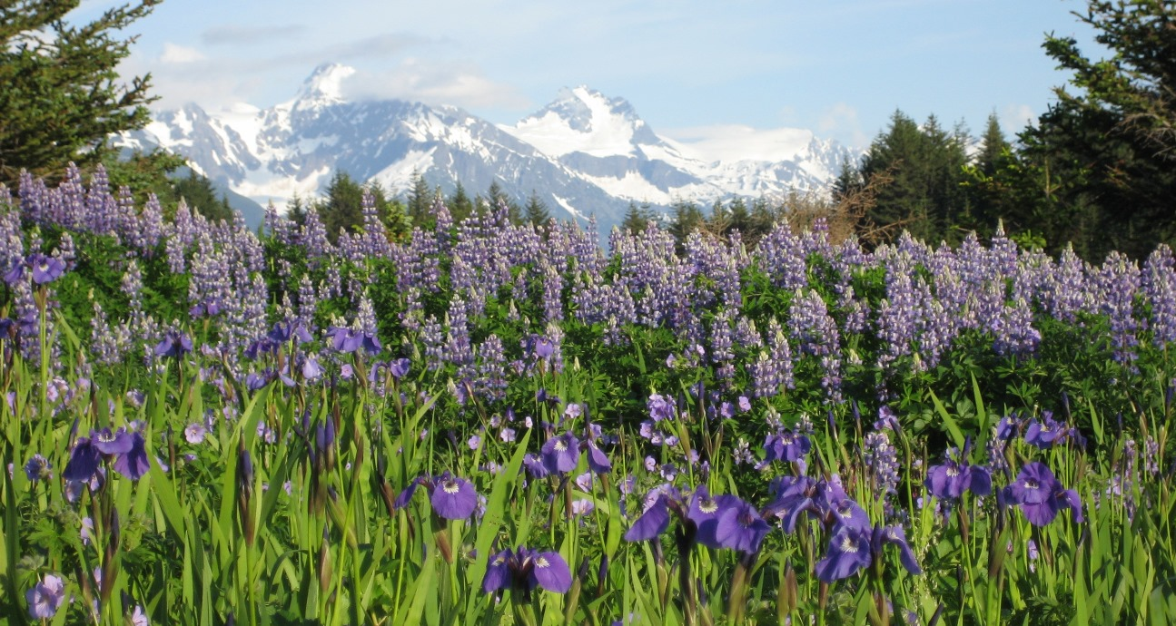 Haines offers great hiking options