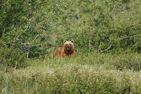Chilkoot Lake & River area offers frequent bear sightings during the summer