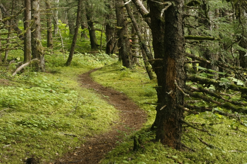 The trail meanders through the Alaskan temperate rainforest